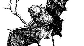 الخفاش الذي لا يرى ، كذبة صدقها الكثيرون !