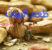 طعم البيوت – عبد الرحمن الطويل